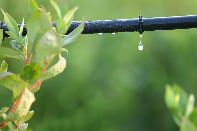 Greywater Systems Drip Line
